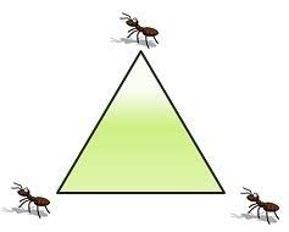 thumbnail of: Ant and Triangle Problem
